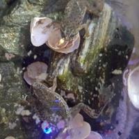 Moje żabki .......