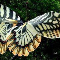 Nadleciał wielki motyl