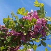 Obfite kwitnienie
