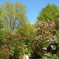 Ogród Botaniczny w Warszawie (fragment)