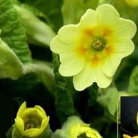Pączki i kwiatki:)