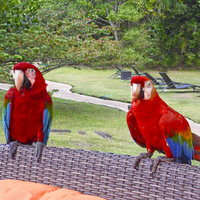 Papugi z Amazonii