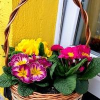 pierwsze kwiatki zdobią balkon :)