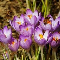 pierwsze pszczółki ......