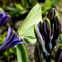 Pierwszy, wiosenny motylek:)