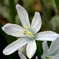 Wiosenna delikatność