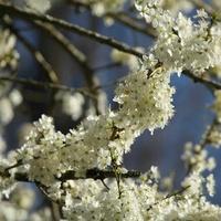 Wiosenne pozdrowienia:-)***