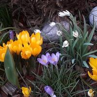 Wiosenny obrazek:-)