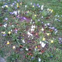 Wiosne juz mam oraz zimny polnocny wiatr