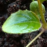 Zagadka z rośliną doniczkową