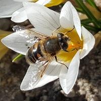 Zamiast pszczoły pojawił się bzyk...