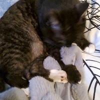 Zapracowany kot ;)