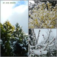 Zima przyszła wiosną