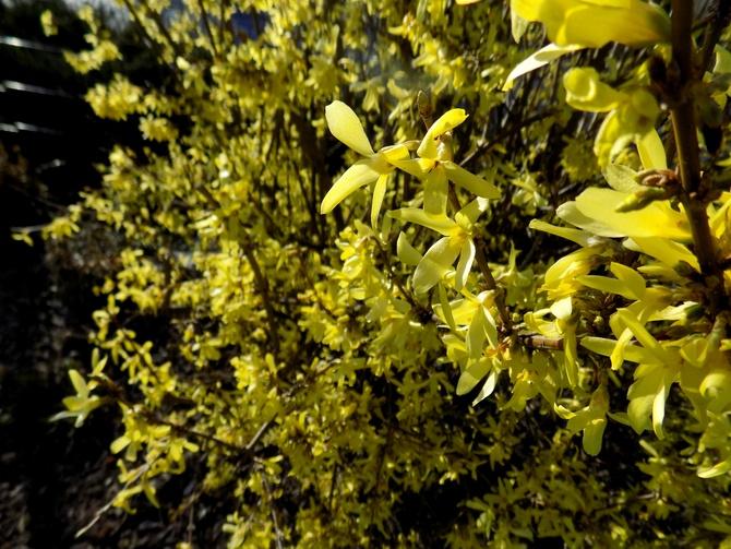 Dużo żółtego Wam zostawiam :)