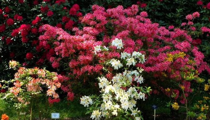 Krzewy w ogrodzie botanicznym