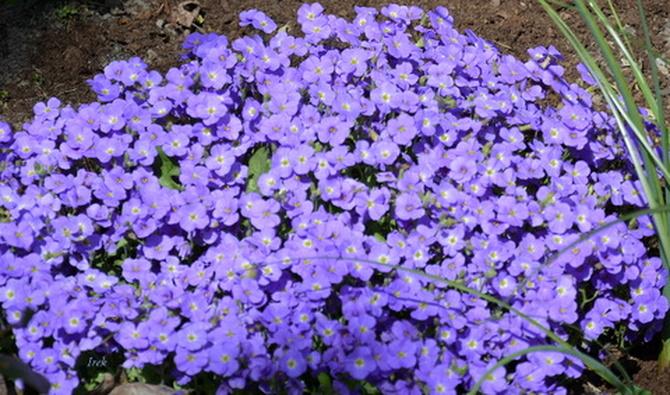 kwiaty jak dzisiejsze niebo