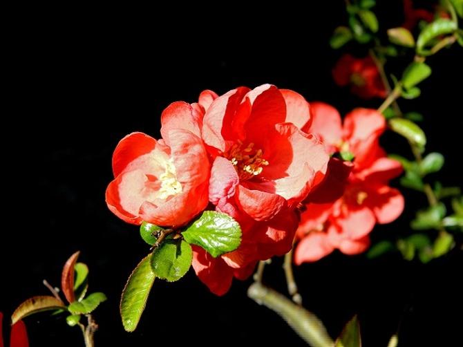 Obsypany kwiatami:)