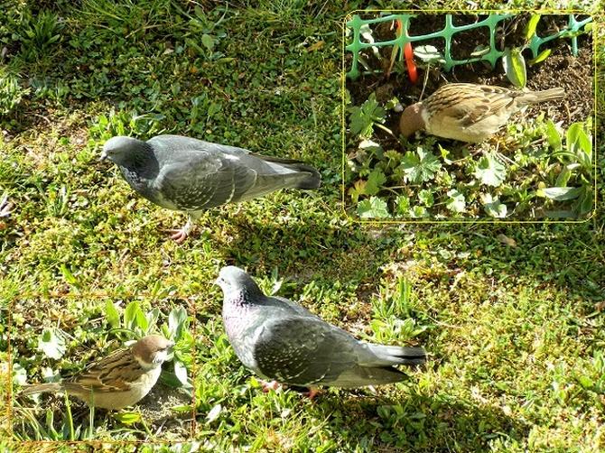 Ptaszki się pasą;)