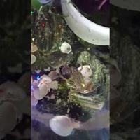 Żabki domowe.....
