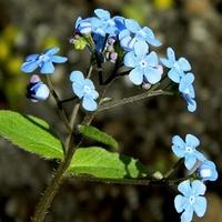 Błękitny bukiecik:)