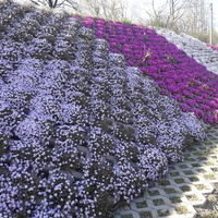 Ściana z kwiatów......