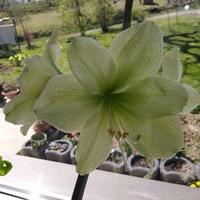 I zielony :)