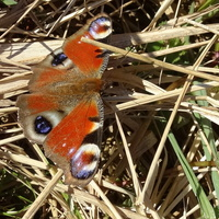 Jak motyle, jak motyle. . .