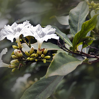 Kwitnący przydrożny krzew