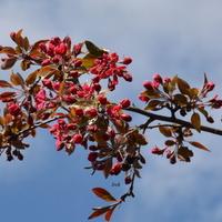 Kwitną drzewa