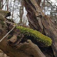 Legalny spacer w lesie .....