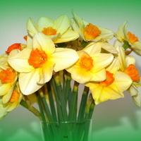 Moje kwiaty Wielkanocne