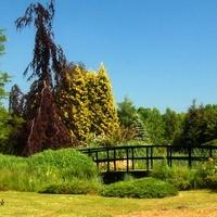 mostek nad kanałkiem w ogrodzie botanicznym
