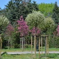Nowe drzewka zasadzone w parku