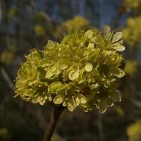Seledynowe kwiatuszki