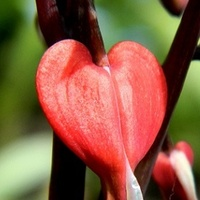 Serce w ogródku:)