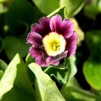Wczoraj jeszcze pączek, dziś kwiat:)