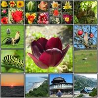 Wspaniały Świat Kwiatów ,mam 7000 zdjęć