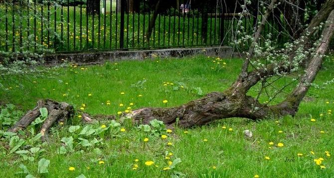 biedne drzewo w parku