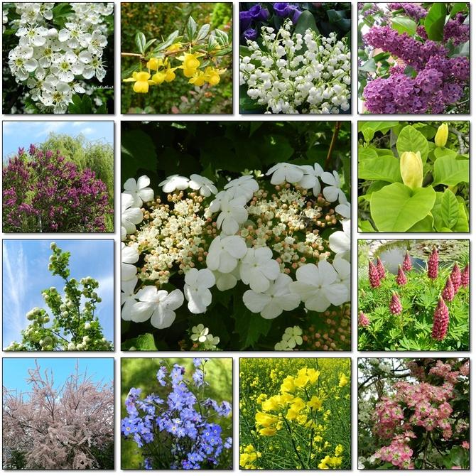 Majowe kwiaty 2020