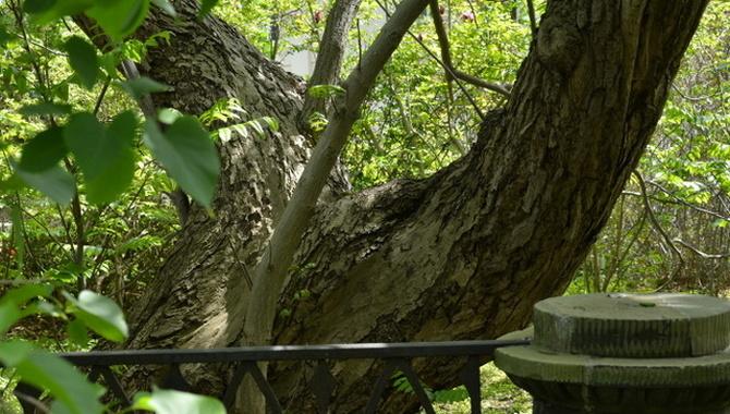 rozdwojone drzewo w ogrodzie botanicznym