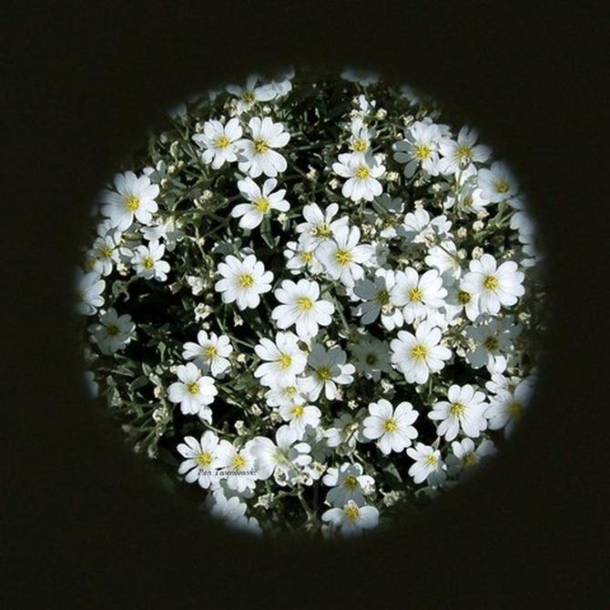 Szkoda, że na księżycu nie mogą rosnąć kwiaty