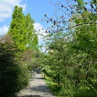Aleja z drzewami w parku