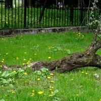 Biedne Drzewo W Park