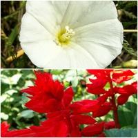 Biel i czerwień,Nasze barwy