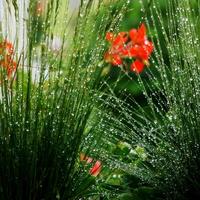 deszczowe klejnoty :)