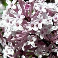 Drobniutkie kwiatuszki, ale szczęśliwe:)