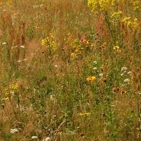 łąka z kwiatkami