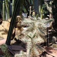Kaktusy w ogrodzie botanicznym