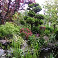 kawałek ogrodu