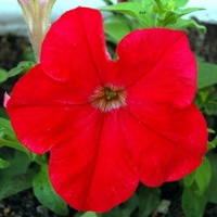 kwiatek na rozgrzewkę